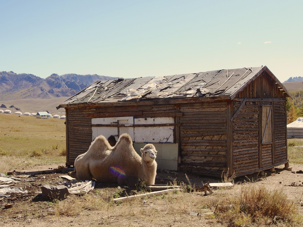 Que visiter en Mongolie?