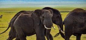 Ce qu'il faut savoir sur le parc Tarangire à Tanzanie