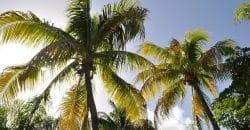 Séjourner sur l'île de Marie Galante en Guadeloupe : une expérience à vivre